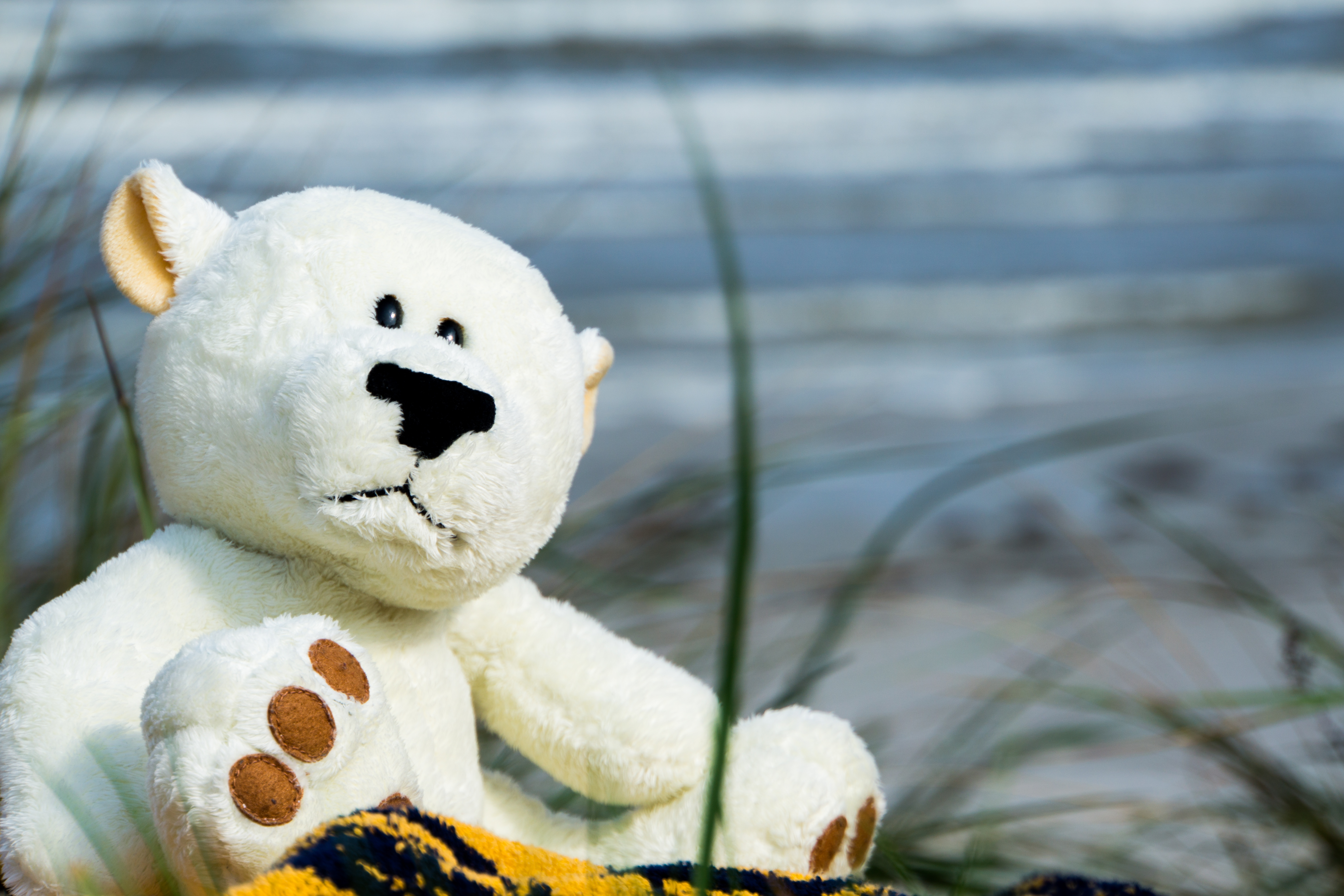beach-water-snow-white-flower-bear-holiday-blue-toy-teddy-bear-background-snowman-bears-funny-plush-teddy-giant-panda-stuffed-toy-672137.jpg (1)